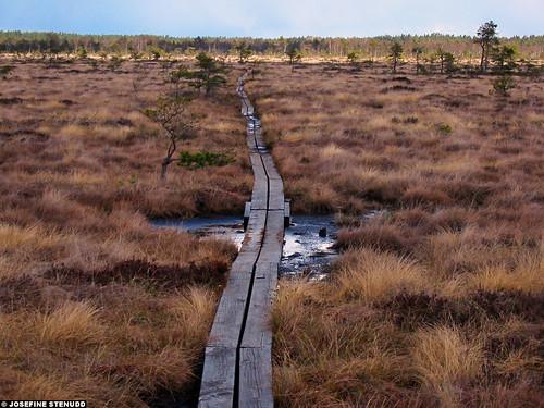 2005 favorite beautiful landscape scenery europe sweden norden skandinavien småland sverige scandinavia smaland wetland nordiccountries storemosse photophotospicturepicturesimageimagesfotofotonbildbilder