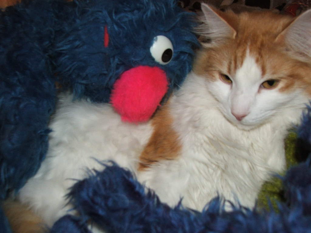 Sesame Street Grover Puppet Muppet and Travis my cat | Flickr