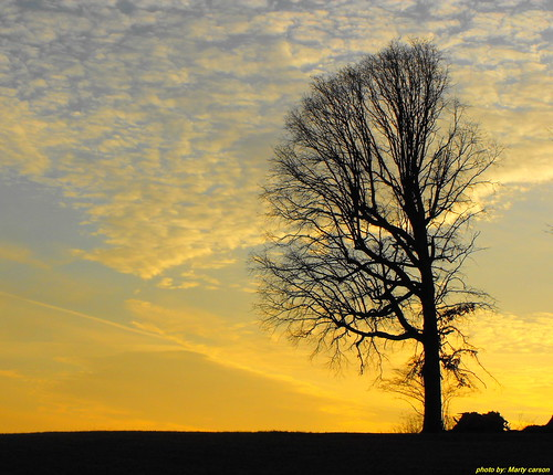 tree silhouette sunrise carson photography tn tennessee east morristown easttennessee easttn morristowntn hamblencounty carsonphotography