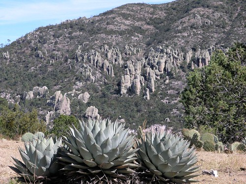 mountains latinamerica forest cacti mexico landscapes flickr 2006 durango succulents mex gpsapproximate