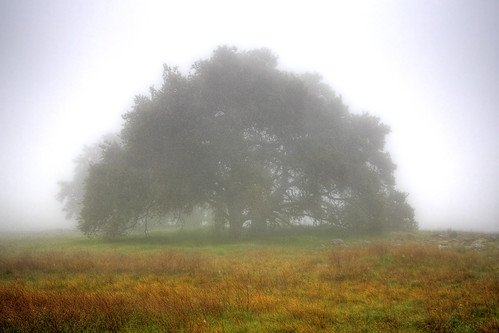 california usa tree nature fog canon landscape photo oak flickr award lone temecula 2009 naturepreserve murrieta cubism santarosaplateau potofgold tenaja 40d treesubject photographersnaturecom davetoussaint davetoussaintcom