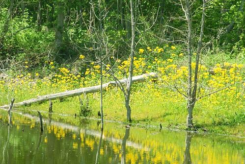 flowers plants woods wetlands