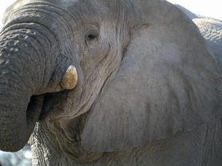 Elephant drinking, Etosha National Park, Namibia | by Frank.Vassen