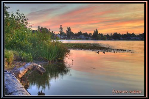 pink blue sunset lake reflection tree water nikon ducks hdr d90 3xp 18200mmf3556 ☆thepowerofnow☆