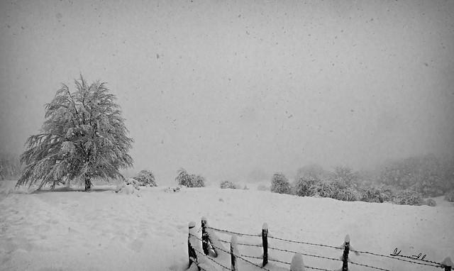 Nevada 01BN.- Snow  01BW. Nº 183