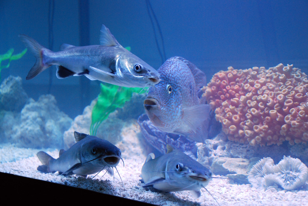Swarm of Fish