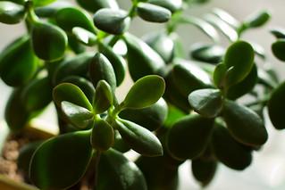 Just a little green...   by KeriFlur
