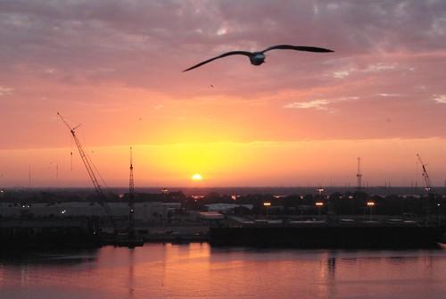 cruise carnival bird water sunrise reflections tampa florida cranes western vacations caribean beautyofwater cruise09