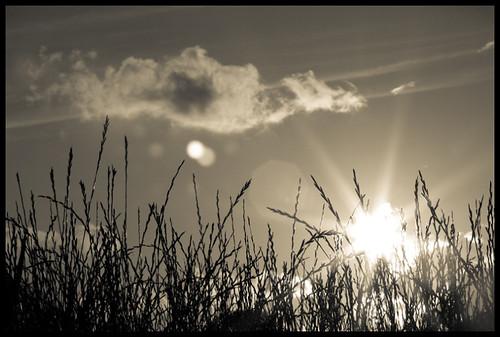 bw cloud sun white black nature clouds natuur wolken explore gras van frontpage zwart wit zon menno wolk winden