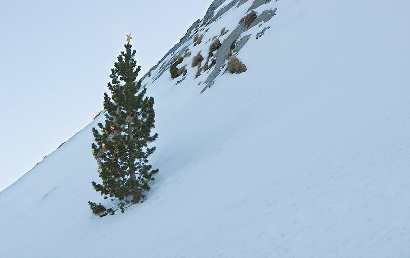 Árbol de Navidad / Christmas Tree