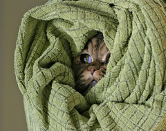 Wrapped cat | by Vincent Giraud