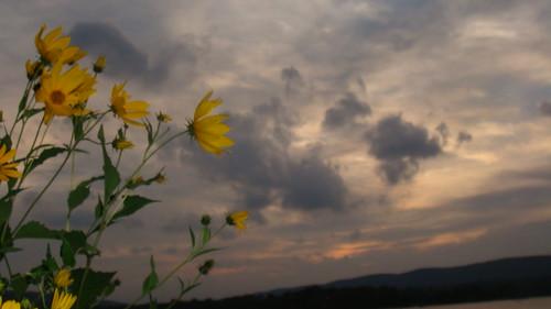 sunset mountain flower river
