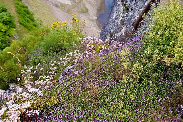 végétation pic de rochetaillée / st-étienne