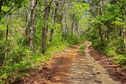 road trees brown green forest outdoors woods capecod country explore trail mashpee inspiredbyyourbeauty