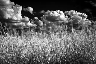 clouds, grass, motion   by briphi
