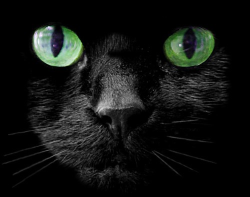 Black cat   by @Doug88888