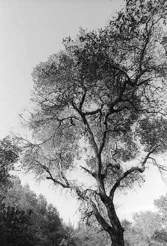 tree and sky | by kaiyen