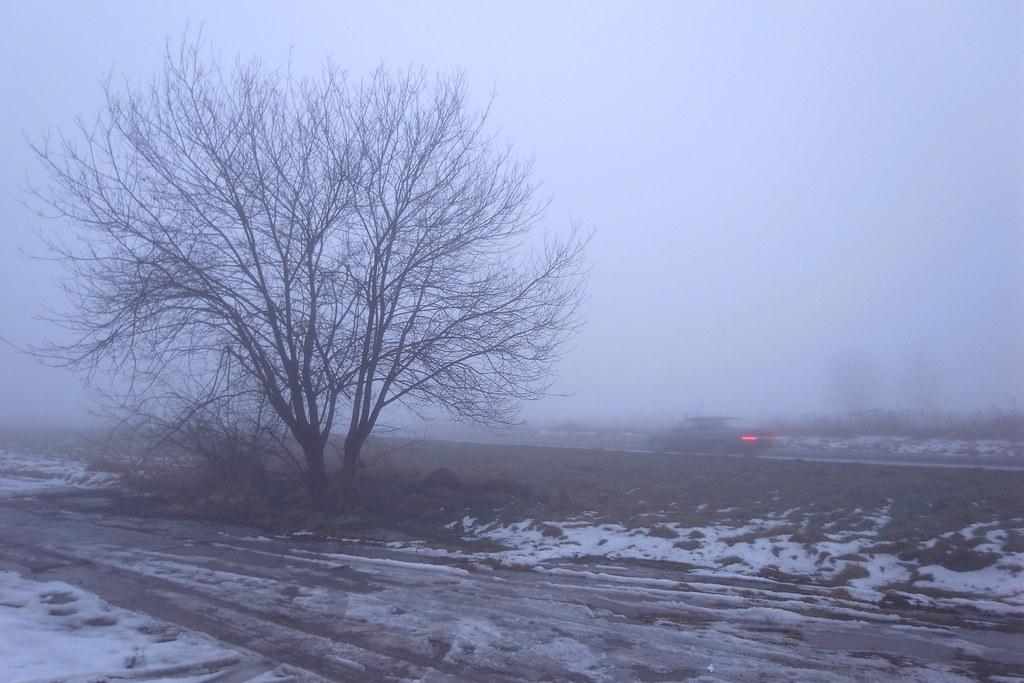 Mglista odwilż / Foggy thaw