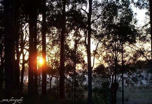 grass silhouette sunrise landscapes bush australia explore queensland sunburst lightning breathtaking goldcoast goldcoasthinterland naturesfinest awesomeshot straightoutofthecamera burningskies sootc bej kodakdx7590zoom platinumphoto mudgeeraba theperfectphotographer multimegashot absolutelystunningscapes