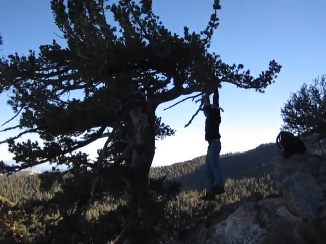 125_Cornell-Peak-tree-swinging
