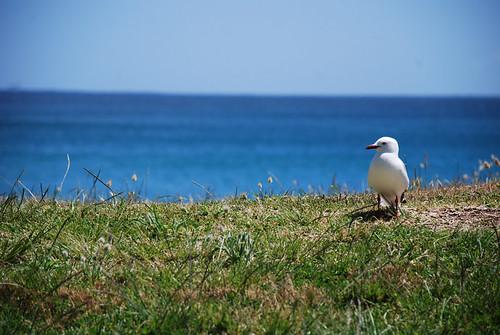 Cape Reinga, New Zealand | by Heike_Quosdorf