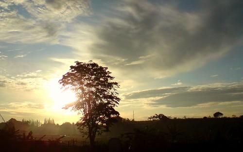 blue cloud tree sunshine sunrise dark grey newhope siluet picnik