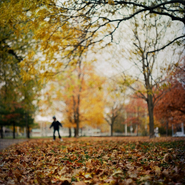 traversing leaves