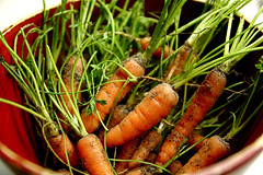 Baby Organic Carrots from Garden 10-6-09IMG_6718 | by stevendepolo