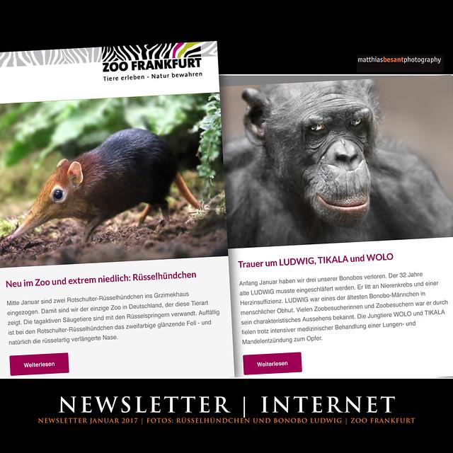 NEWSLETTER | INTERNET