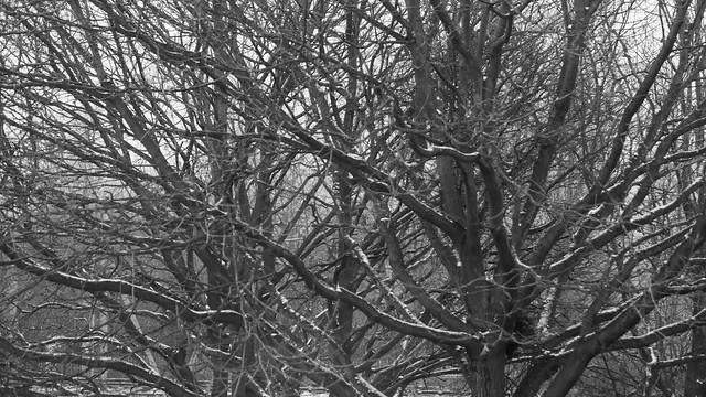 Colchester Snow
