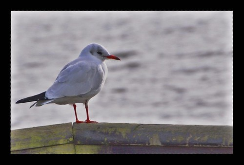 Bird Ready to Fly | Just got Nikkor 18-200vr Lens today ...