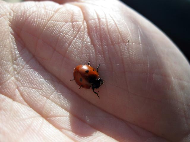 Ladybug on my hand, Dodson Chapel Rd, Overton Co, TN