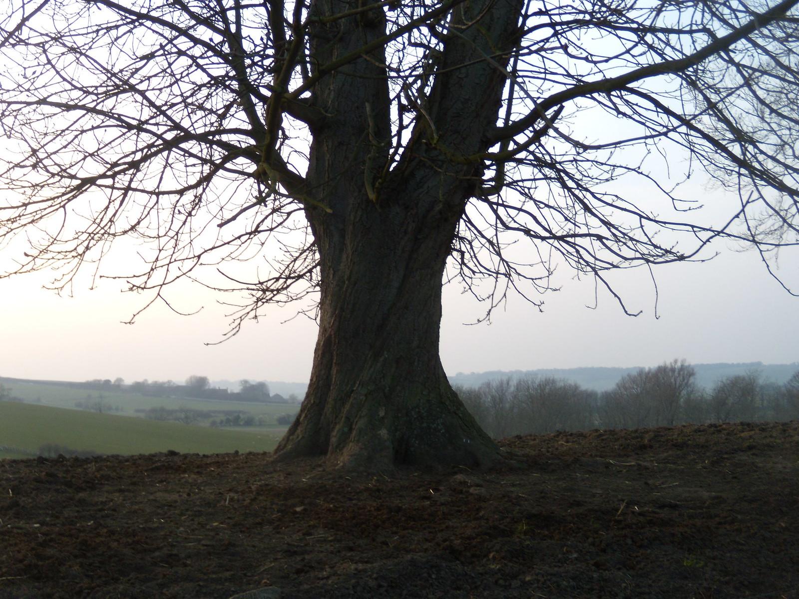 Tree, Winchelsea Rye Circular