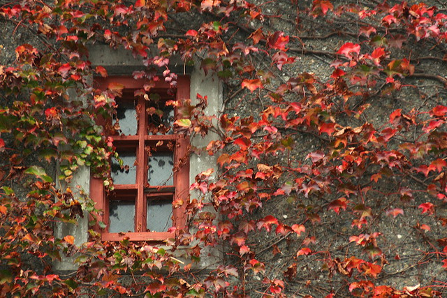 Window of Art