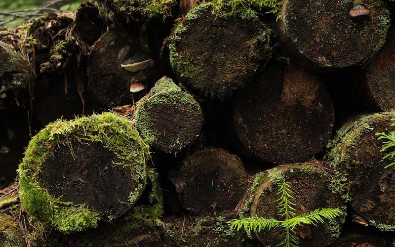 Vieux tas de bois / Old Log Pile
