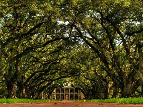 louisiana hdr oldbuilding plantationhouse lanscapes oakalleyplantation