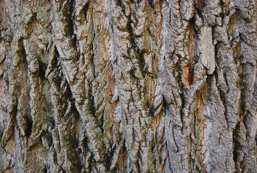Tree Bark Texture 04 | by SixRevisions