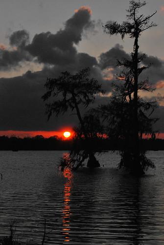 sunset sky orange cloud reflection tree water photoshop manipulated cutout evening nikon louisiana outdoor swamp spanishmoss cypress selectivecolor d60 lakemartin 3541 cmwdorange