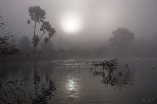 california morning fog sunrise photography still nikon peace image sandiego stock dream foggy peaceful tranquility explore zen meditation spirituality spiritual tranquil dagobah dx lakemurray missiontrailsregionalpark d90 dailyrayofhope nickchill