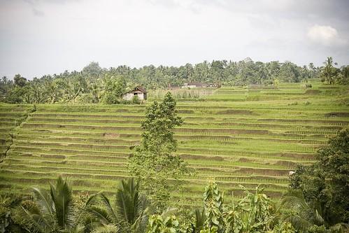 Bali day 4 | by chongeileen