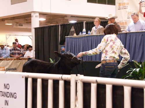Houston Texas Livestock Show and Rodeo Reliant Center East Arena Brangus Cattle Sale or Auction March 7 2009  Cow calf heifer calves P3072063 | by mrchriscornwell