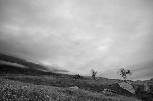 california landscape nikon d300 tokinaatx124prodx nikond300 shotwithstevemendenhall desertempirefair2009