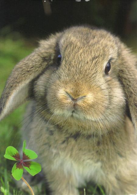 Bunny & 4 Leaf Clover Postcard