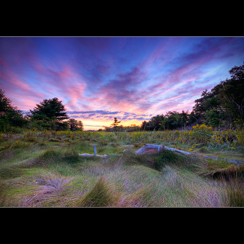 flower tree grass sunrise dawn log highway maine sigma driftwood moe 1020mm 295 moe76