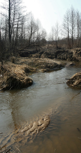 morning trees panorama nature water creek river spring sand stream drygrass canoneos30d ef35135456 vygonichy vyhanichy vyhanichankatourismfishingbase
