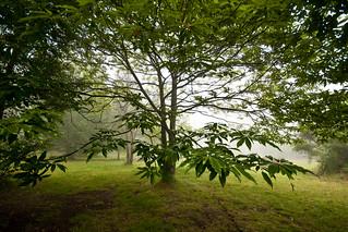 Galicia es verde