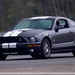 2009 Shelby GT500  by lclutchl