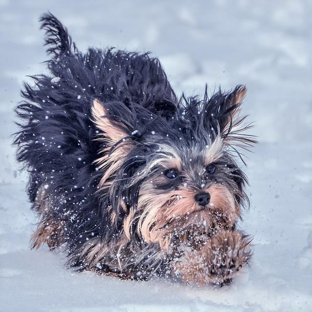 Snow Where To Go