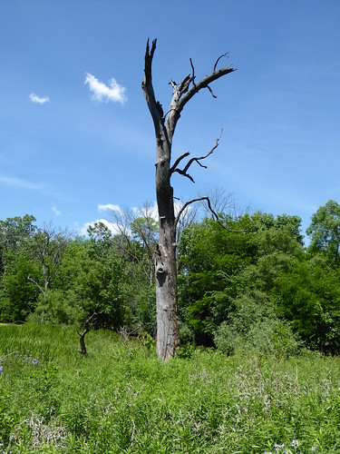 brookfieldil brookfieldzoo nature fauna flora green trees bushes grass deadtree