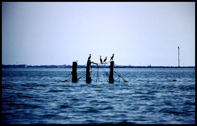 Laguna di Venezia - Venice Lagoon